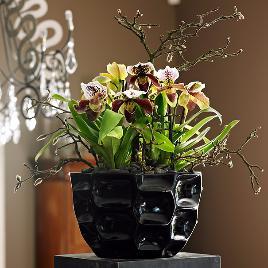 Покупка цветов оптовая г екатеринбург, доставка букетов в твери
